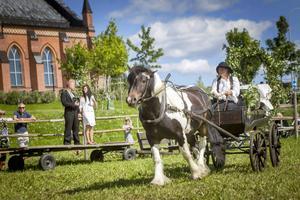Eva Wallin kör sista grenen brukskörning med häst och vagn. Bakom väntar paret Johanna och Robin Lindberg på upphämtning inför publik!