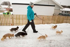 En promenad kan lätt bli trasslig med ett gäng chihuahuor.