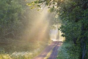 Somrig morgon på landet, Vetlanda kommun. Bild: Karin Hedström