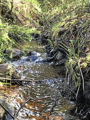 Härligt porlande liten bäck i skogen i Röshult.