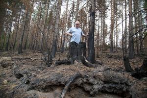 Den förkolnade skogen är fortfarande farlig att vistas i.