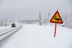 Vägmärke som varnar för renar på vägen. Foto: Fredrik Sandberg