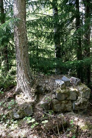 Skogen har tagit över en boplats. Men spåren av en husgrund kan fortfarande anas. Arkivbild