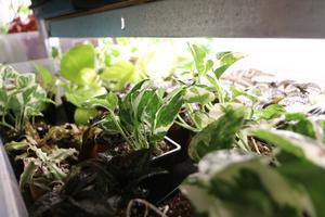 Grönväxtriket skickar plantor till hela Sverige och har även kunder utomlands, bland annat i Sydkorea.