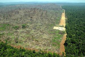 Skövlad regnskog i Brasilien. Foto: Alberto Cesar/AP