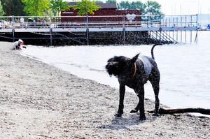 Inga lösa hundar i kommunens centrala delar anser Sverigedemokraterna
