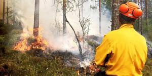 Naturvårdsbränning är en kontrollerad som anläggs på en avgränsat område. Syftet är att gynna och bibehålla den biologiska mångfalden i skogen. Bilden är från en annan naturvårdsbränning. Bild: Länsstyrelsen.