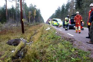 Älgen dog direkt i kollisionen med bilen.