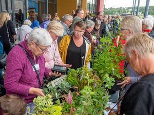 Växtmarknad vid arenan. 16 växtsäljare från hela landet. Det var tidvis mycket trångt vid försäljningsborden. Man måste hålla sig framme om man ska hinna köpa det man vill ha. Foto: Christina Fryle
