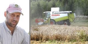 Höstvetet ger bästa skörden någonsin för lantbrukaren Henrik Schmitterlöw i Hallstavik.