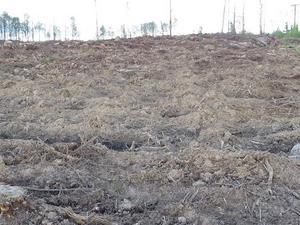 Kalhyggesbruket härjar i skogarna, anser signaturen