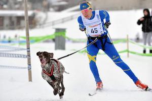 Lars-Åke Blom, Borlänge, här i landslagsdräkten, tog ett SM-guld i pulkkörning i Skellefteå. Foto: Tiina Blom.