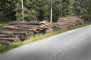 Det är extra kostsamt och besvärligt att upparbeta och transportera bort virket från öarna till fastlandet. – Det har varit väldigt svårt att få tag på pråmar och lastbilar, säger Magnus Jerreling på Naturskog AB.