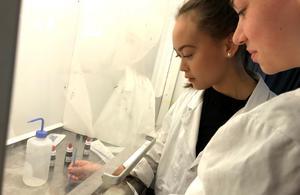 Ella Ängskog och Thea Wivalius tar det försiktigt när de ska färga bakterier.