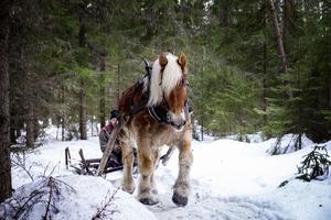 Lars-Göran Eriksson från Edsbyn, med hästen Pålle.