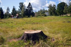 Gamla träd kan vara värda åtskilligt. Nu ska en värdering göras innan frågan om ersättning tas upp.