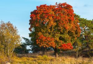 Nu antar naturen höstens färger.