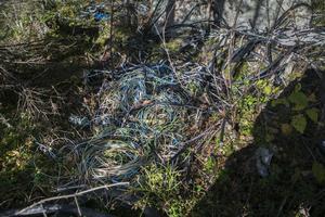 I skogen bakom ett av de övergivna lägren ligger högvis med skalade kablar.
