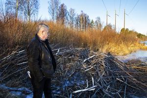 Lasse Blomqvist har inte själv sett några bävrar i området, men vet var de har sitt bo.
