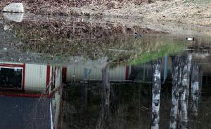 I Hammar, Fränsta, har ett par knipor hittat en lugn rastplats på en översvämmad tomt.