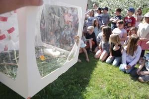 Fjärilarna har bott i särskilda lådor i klassrummet.