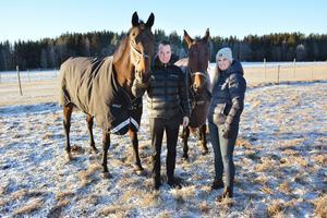 Hopphästen Pandora och travaren Power Broline tillhör ögonstenarna för travparet Rikard N Skoglund och Lina Bergström (som gärna varvar travet med att rida och hoppa) hemma på Wolmsta gård.