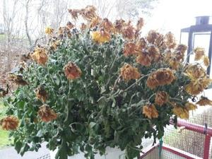 Trista blommor på balkongen.
