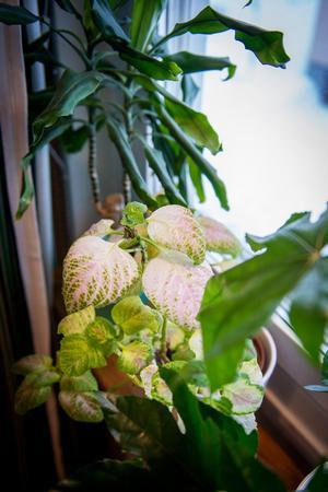 Gröna växter finns det gott om i hemmet och de står på Joakims egenbyggda fönsterbrädor i teak.