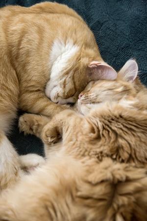 Gosiga katterna Otis och Miris är far och dotter.