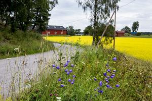 Landsväg på landsbygd med fält och bondgård i bakgrunden. Foto: Christine Olsson / SCANPIX.