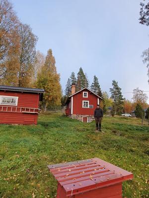 Nisse Ingrids vid Kurbergets fäbodar i Yttertänger där hunden Disa blev biten av vargen.
