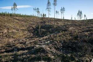 Den omdebatterade avverkningen vid Brännvinsberget, norr om Furudal.