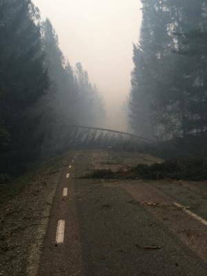 Här bland brända och fallna träd hittade brandmännen Björn Svensson och Mikael Bergner den svårt brännskadade Reine Ullén. Foto: Björn Svensson