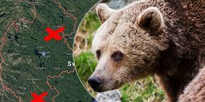 Bilden är ett montage. Det är inte björnen på bilden som setts i skogen.  Foto: Google maps/ Ludwig Arnlund
