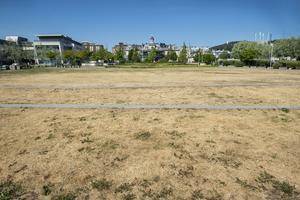 Hamnparkens sönderbrända gräsmatta gapar tomt. Trots en svalkande bris från havet.