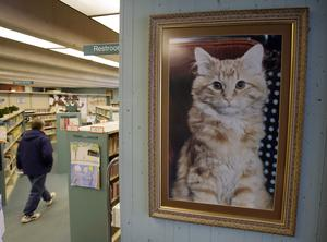 Bibliotekskatten Dewey var också lönsam. En av böckerna om honom inbringade 1,2 miljoner dollar. Den summan skulle till och med betala vår kommuns nya dyra bokbuss, skriver Casten von Otter. Foto: Charlie Neibergall, TT.