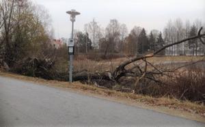"""Idag, drygt ett år senare, ligger fortfarande resterna kvar av denna """"föryngring"""" i form av avsågade grenar, delar av trädstammar och en allmän oreda."""