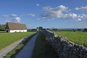 Bildtext 10: Grönskande fält i närheten av Ava-gården, östra Fårö.   Foto: Anders Pihl