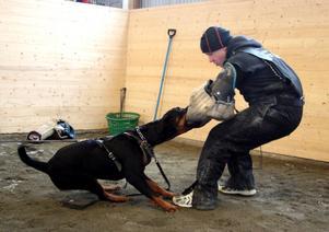 Fia håller ett stadigt grepp om armen på Lars Lindström. Ett av momenten i träningen går ut på att hunden ska hålla sig kvar trots att instruktören försöker skaka sig loss.