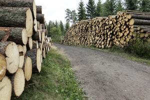Skogens brukas på ett hållbart vis, hävdar Mellanskogs ordförande Karin Perers och  LRF:S Magnus Kindbom. Fotograf: TT