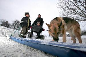 Lasse Permstäde på promenad med Ed, fyra och ett halvt år, Inez, ett och ett halvt och schäfertiken Samba, 11 år.