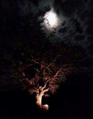 Våran ek har många utseenden beroende på årstiden. Denna kväll va den magisk.