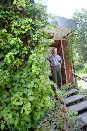 Anders Delins trädgård i Järbo rymmer både vilda och kultiverade blommor.