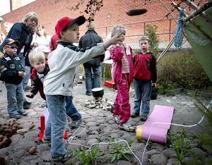 Kottkastning. Att kasta grankottar var en uppskattad aktivitet när Skogsmulle jubilerade i Smedjebacken på lördagen. Här är det Samuel Fredriksson som provar lyckan.