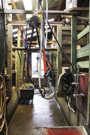 Mjölkmaskinen skulle bytas ut mot en mjölkrobot, men så blev det aldrig.