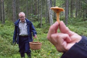 Blodriskan är en fin matsvamp. Men Gunnar Andersson har valt att stoppa giftsvampar i sin korg.