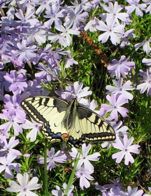 Vackert fladdrande i trädgården