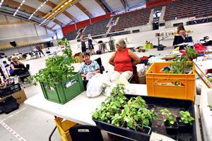 egenodlade växter. Gerd Willmer från Hofors och Angelis Dilén från Torsåker sålde växter som Angelis odlat. Och mest sålda blev tomatplantorna.