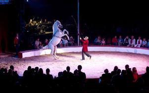 Cirkus Scott kommer till Falun i sommar.
