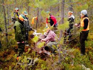 När LT lämnat skogen drog allt igång. Två älgar sköts med femton minuters mellanrum.